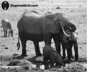 Elephants in Amboseli, Kenya