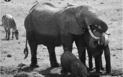 Ziwa, Elephants, and Grit