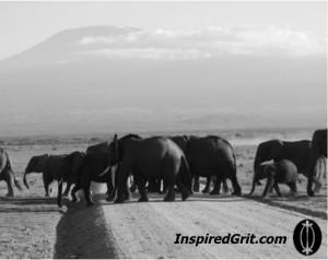 Herd Crossing beneath Mt. Kilimanjaro, Amboseli, Kenya